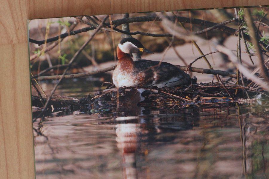 Fotobuchexpress24 Echtfotobuch Fotobeispiel