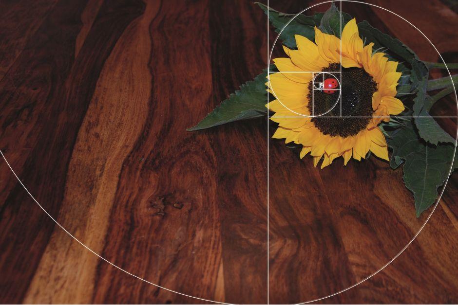Beispiel für angewendete Fibonacci Spirale auf eine Sonnenblume mit Marienkäfer auf der Blüte